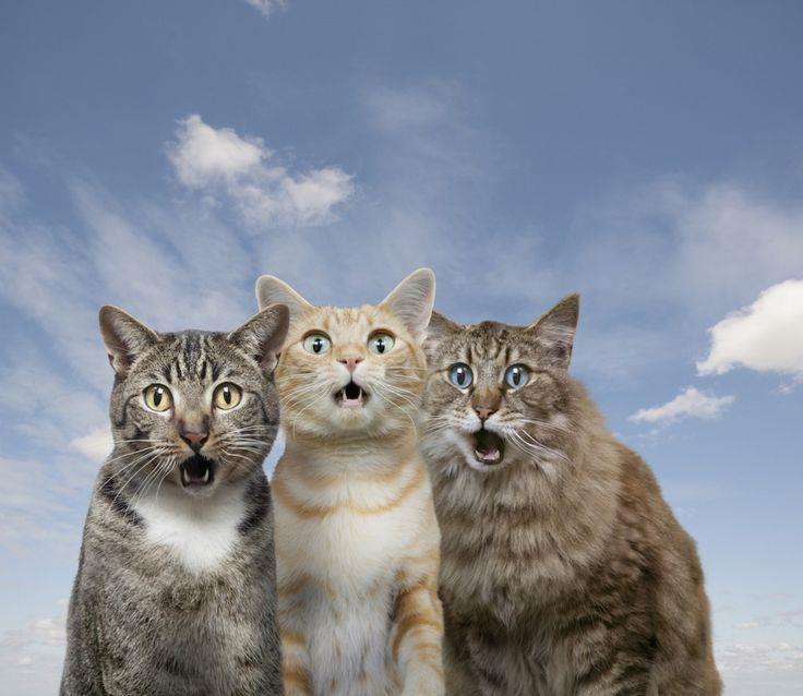 Тигры и тигрята фото  animalsfotocom