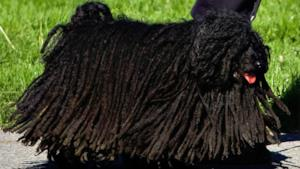 I cani preferiscono il reggae, lo rivela uno studio