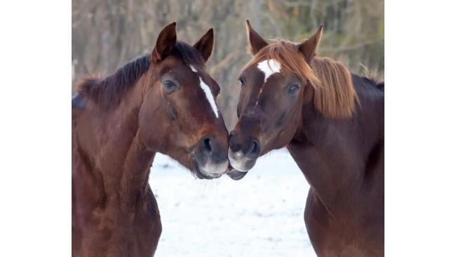 Cavalli golosi