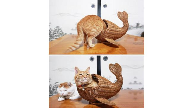 Pesce - gatto in vimini