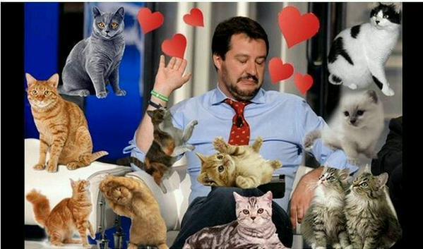 Matteo Salvini assediato dai gattini