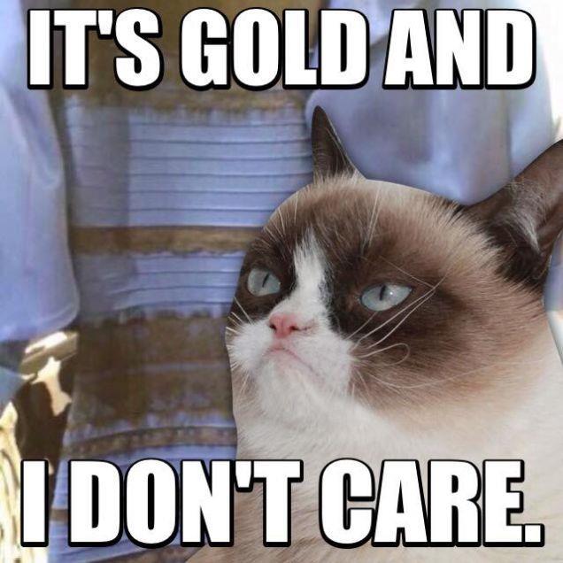 Grumpy Cat: il vestito che ha rotto Internet è dorato