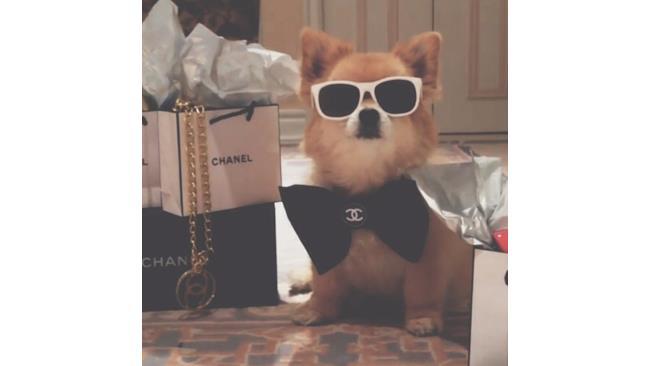 Cane Chanel con occhiali