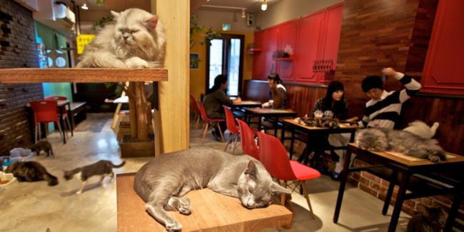 Un Cat Café nei pressi di Montreal