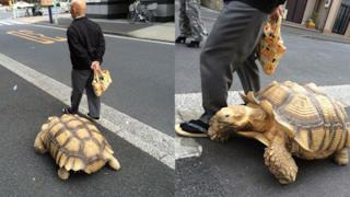 La tartaruga gigante e il suo padrone passeggiano per Tokyo