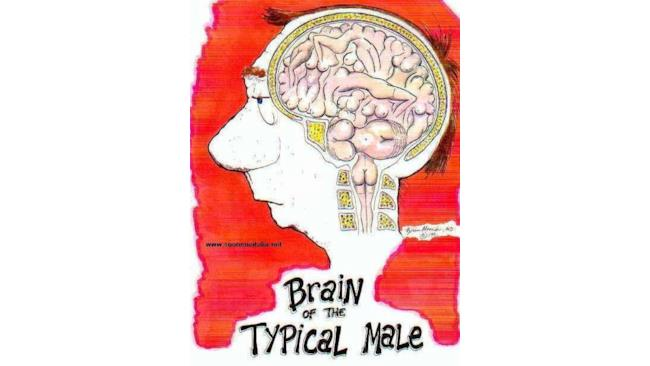Cervello medio-man
