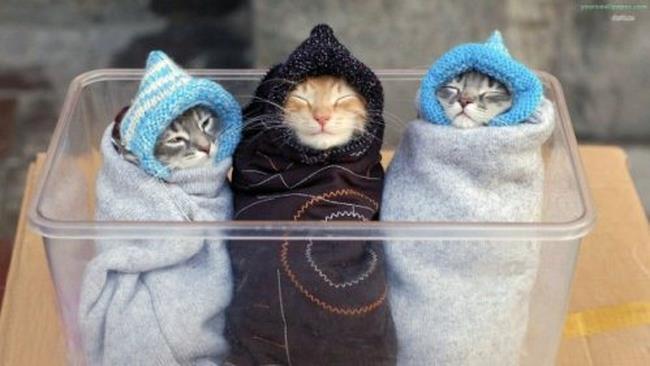 Tre micetti aka tre nonnine