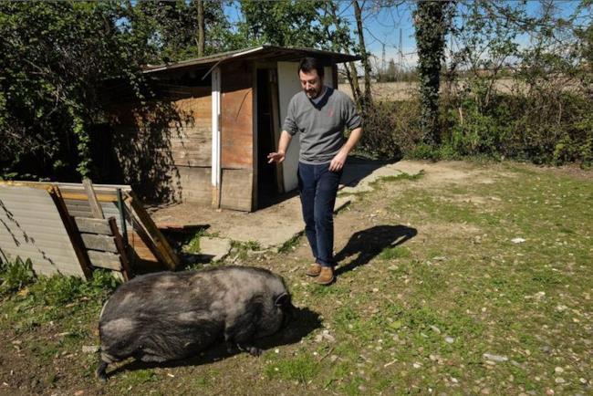 Salvini tenta di calmare il maiale che l'ha inseguito