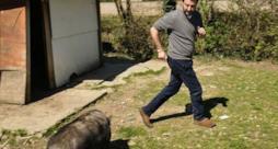 Matteo Salvini scappa dal maiale