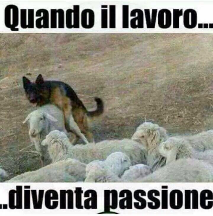 Immagini divertenti per WhatsApp - Un cane pastore e una pecora