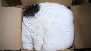 Gatto, doppio gatto e controgatto
