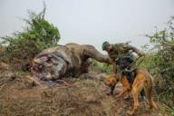 Elephant Poaching scattata da Brent Stirton