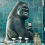 Gorilla in bagno