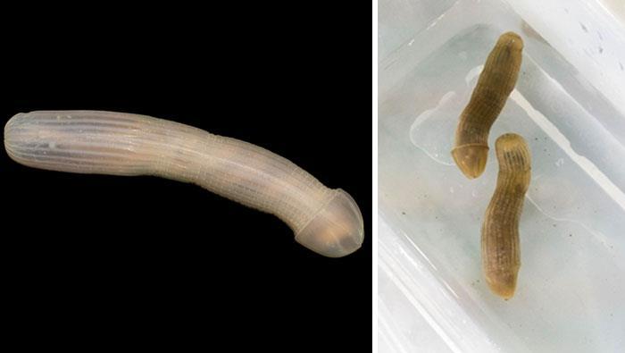 un'immagine del verme degli abissi