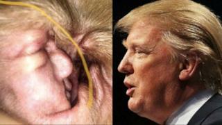 La ciste all'orecchio del cane e Trump