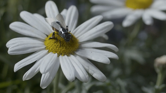 Le api robotiche di Walmart