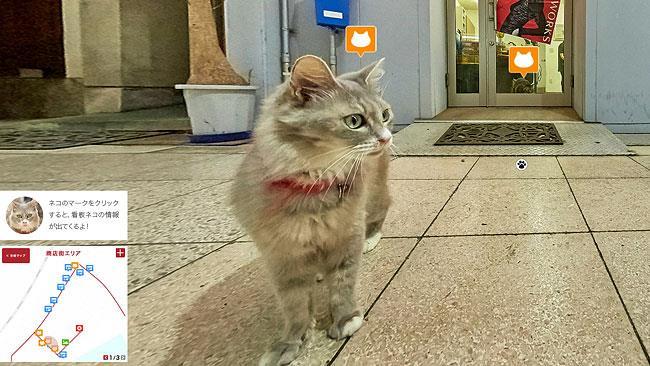 Uno dei gatti di Cat Street View