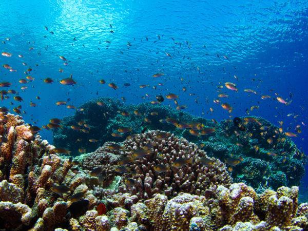 Uno scatto di una barriera corallina
