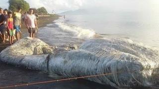 La carcassa di un misterioso animale spiaggiato nelle Filippine