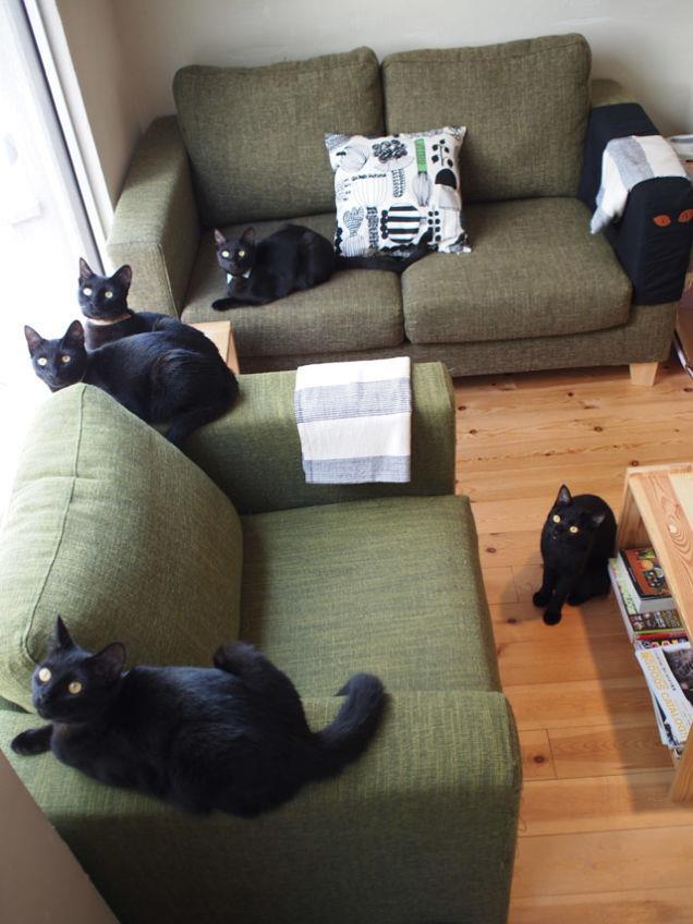 Il café dei gatti neri