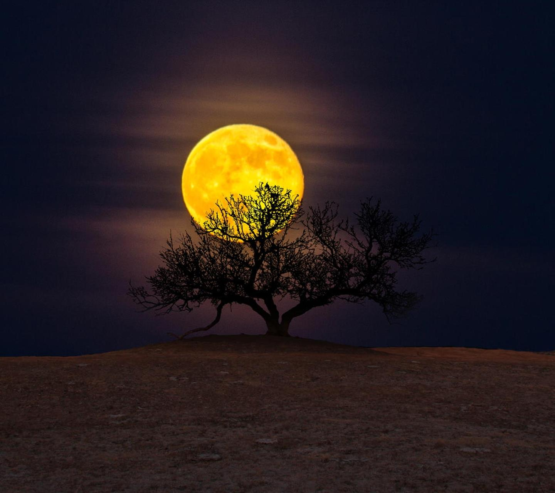 La Luna nella savana - Sfondi per Android, i più belli da scaricare gratis