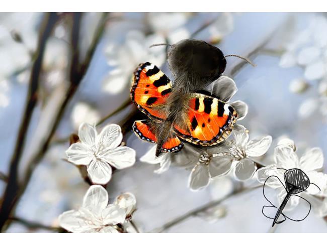 Farfalla pelosa creata con Photoshop e disegno originale