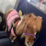 Un pony in aereo.