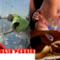 FlopTV, collage dei post più letti della settimana fino al 7 giugno 2014