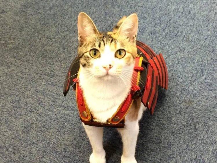 Primo piano del gatto con il costume di un eroe giapponese