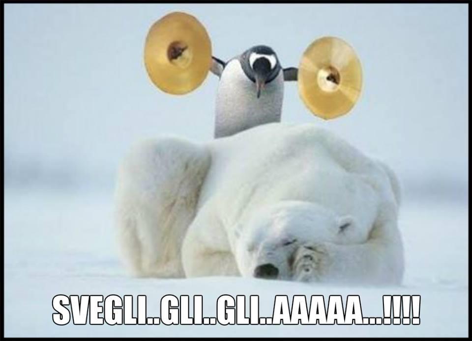 Un pinguino sveglia un orso polare con dei piatti