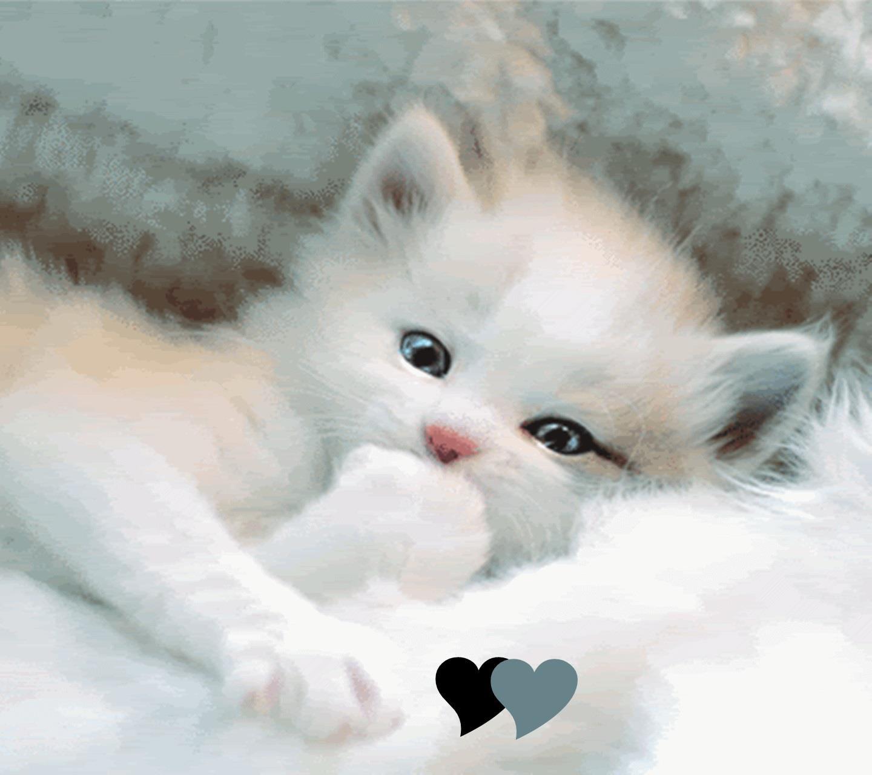 Un tenero gattino - Sfondi per Android, i più belli da scaricare gratis