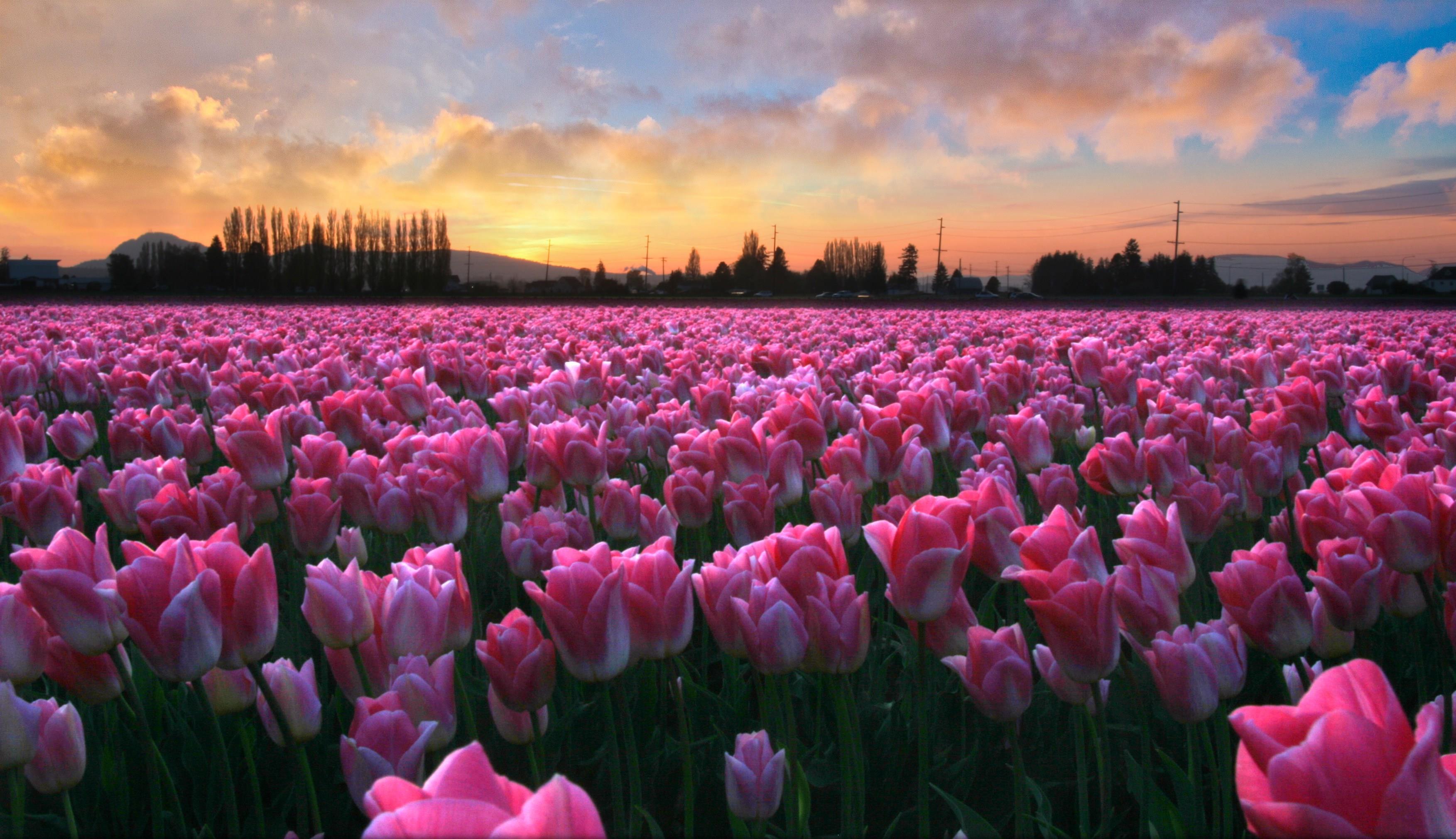 Scarica gratis i migliori sfondi per i tuoi dispositivi for Immagini per desktop natura