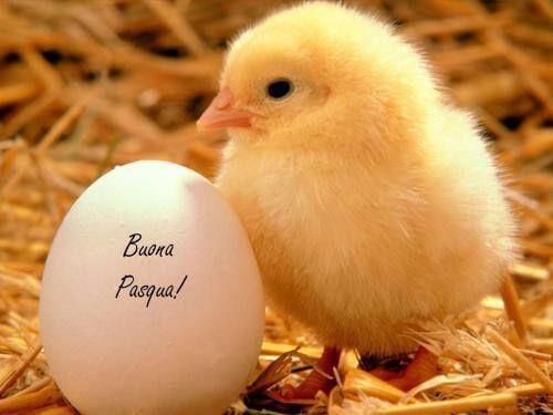 Un pulcino e un uovo - Immagini divertenti per auguri di Buona Pasqua