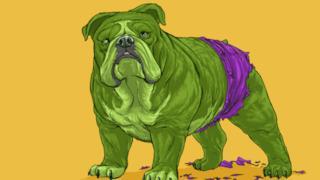 Hulk in versione canina
