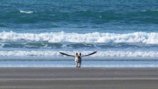 Un gabbiano, un cane e il mare