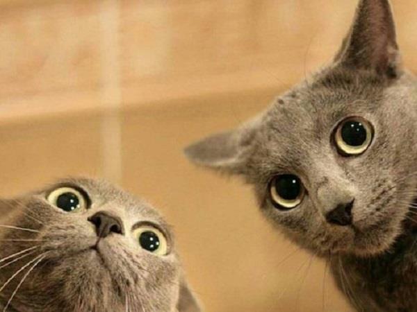 Due gatti con espressione stupita