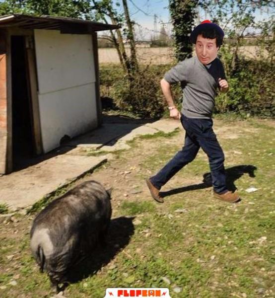 Alvaro Vitali inseguito dal maiale di Salvini