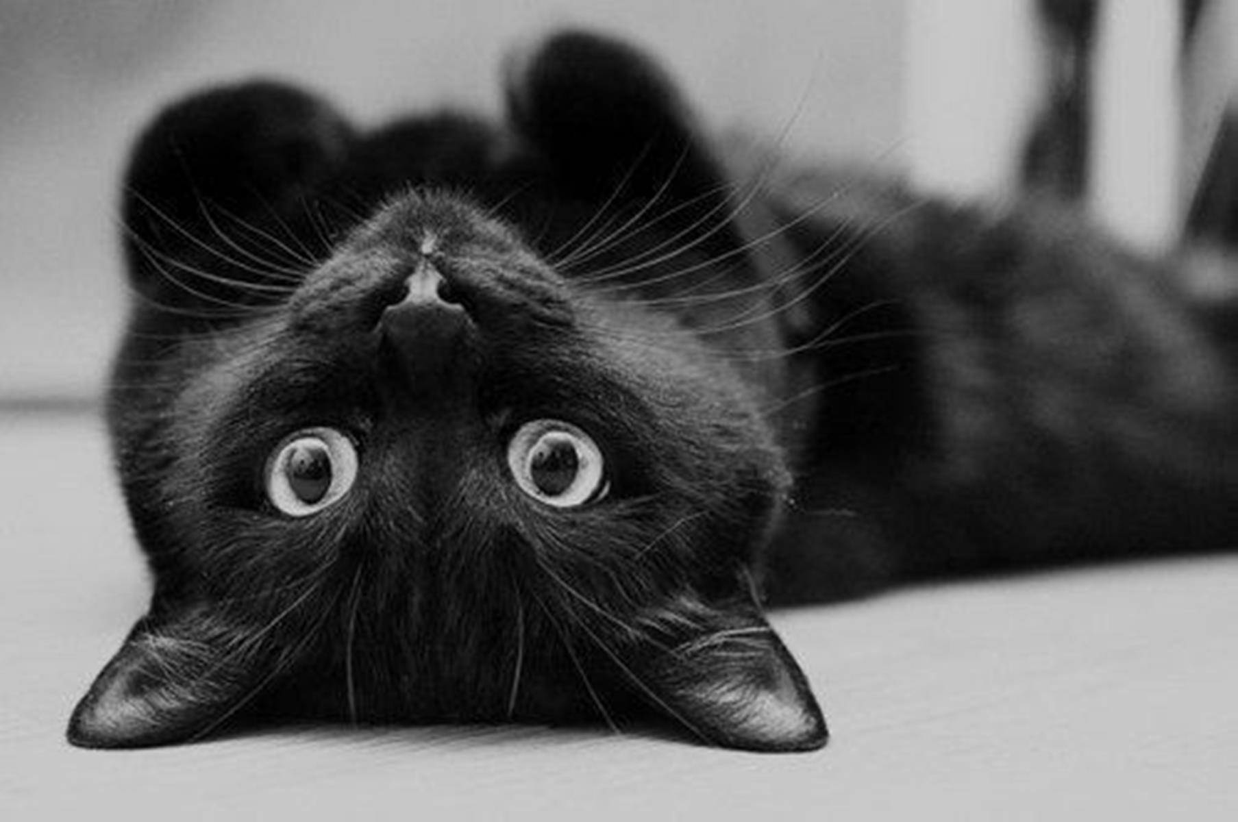Gatto nero a testa in giù