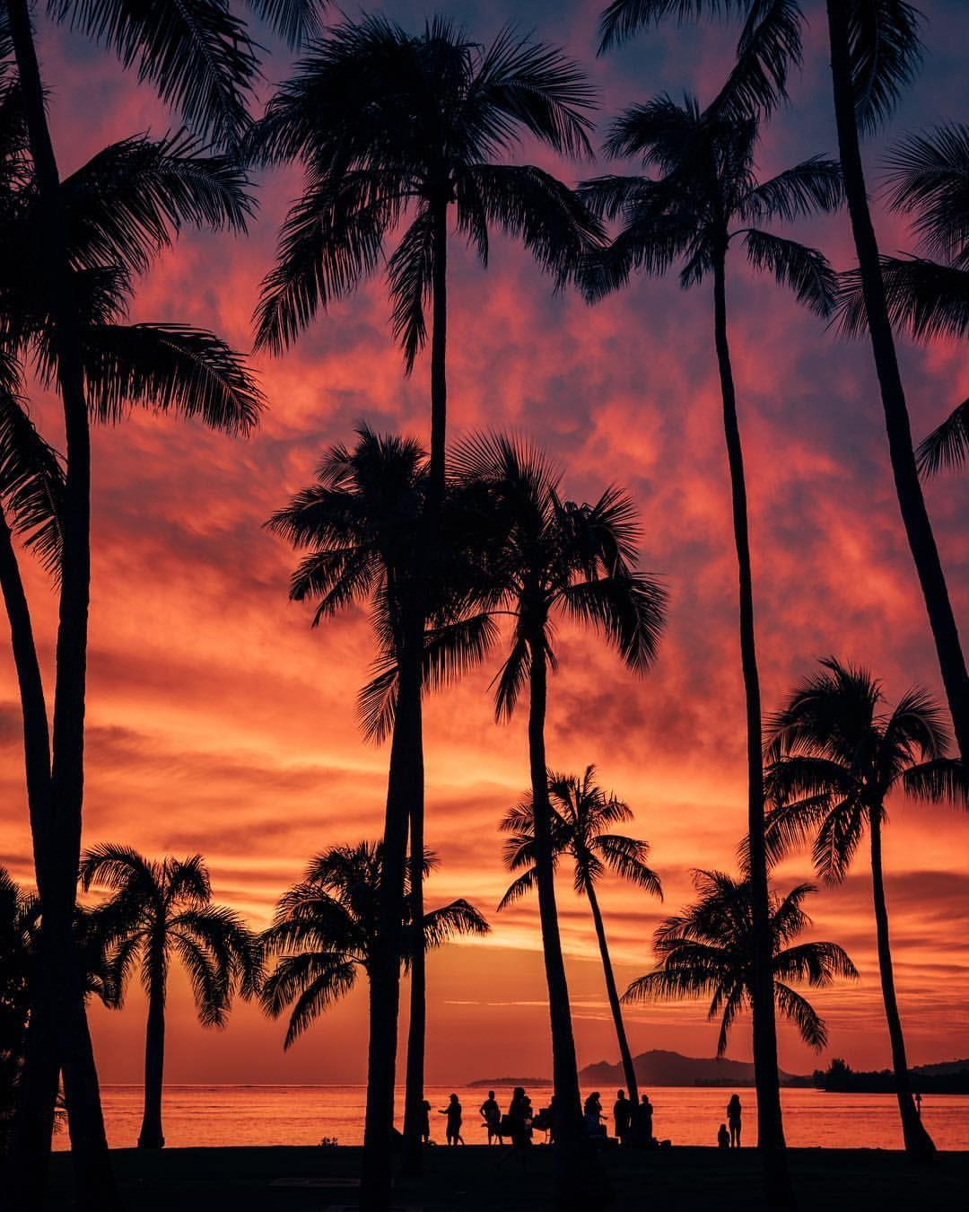 Delle palme al tramonto - Sfondi per PC, iPhone, Android e profilo WhatsApp da scaricare