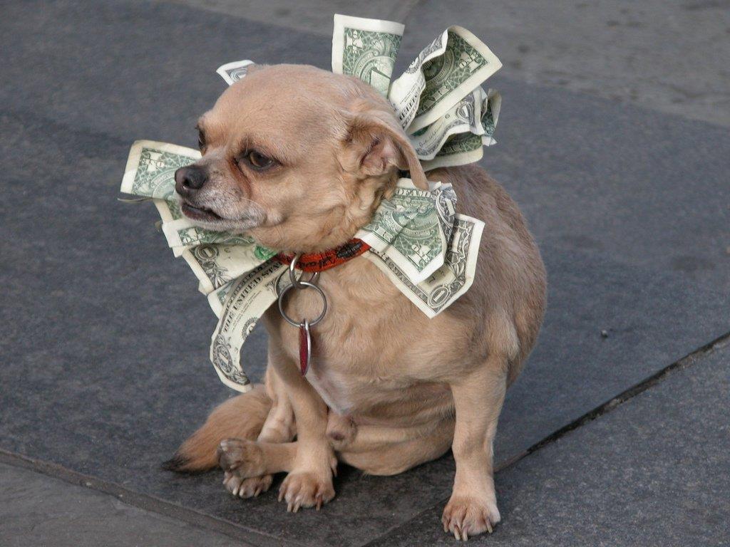 La foto di un piccolo cane