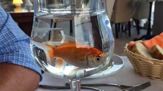 Un pasto servito su un bicchiere con tanto di pesce rosso vivo