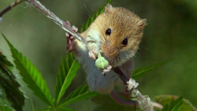 La foto di un ratto