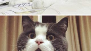 Un gatto sorpreso