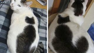 Due gatti in uno