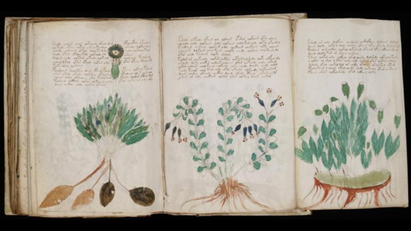 Una parte del Manoscritto di Voynich, in cui sono presenti diverse illustrazioni di piante.