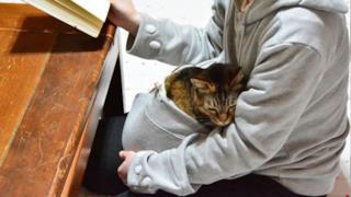 Un gatto accoccolato nella tasca della felpa