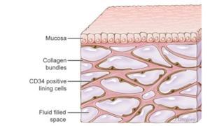Alcune cellule dell'interstizio