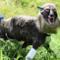 Lupo robot messo a difesa del raccolto in Giappone