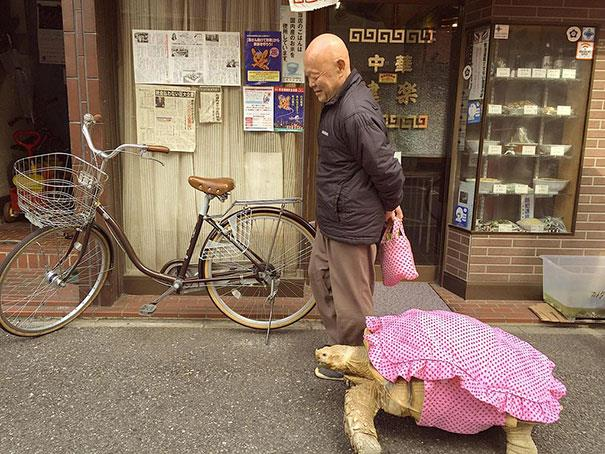 La tartaruga gigante dell'uomo giapponese con un vestito rosa