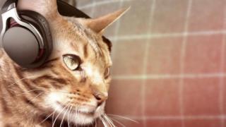 Un gatto ascolta la musica